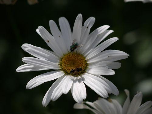 http://serveur2.archive-host.com/membres/images/1336321151/balades/2012-08/pdm-2.jpg