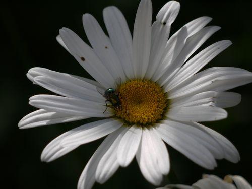 http://serveur2.archive-host.com/membres/images/1336321151/balades/2012-08/pdm-sol.jpg