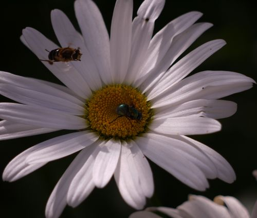 http://serveur2.archive-host.com/membres/images/1336321151/balades/2012-08/pdm-vol.jpg