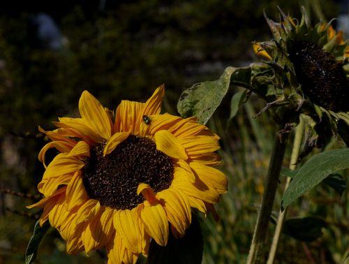 http://serveur2.archive-host.com/membres/images/1336321151/balades/plume/2012/p3.jpg