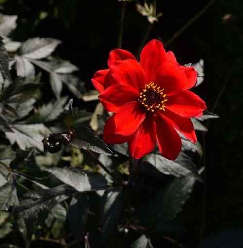 http://serveur2.archive-host.com/membres/images/1336321151/balades/plume/2012/p4.jpg