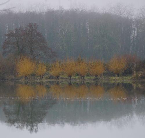 http://serveur2.archive-host.com/membres/images/1336321151/balades/stemarie/2012-12/o0-3.jpg