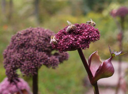 http://serveur2.archive-host.com/membres/images/1336321151/bestioles/insectes/paj.jpg