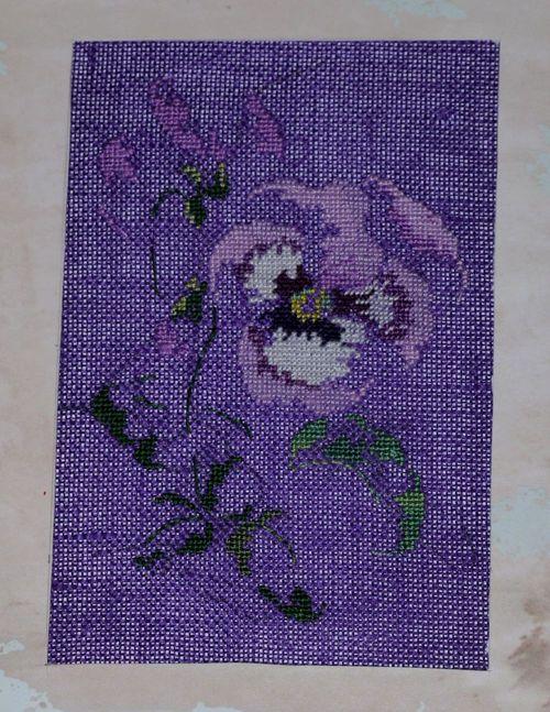 http://serveur2.archive-host.com/membres/images/1336321151/fleurs/Violas/Anne-Marie/0-0.jpg