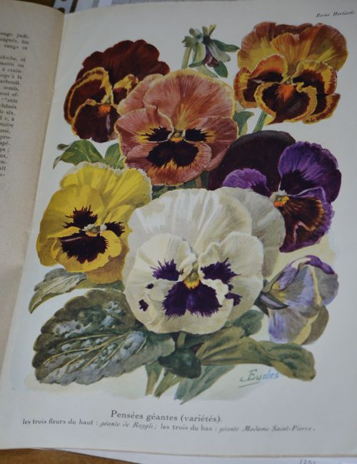 http://serveur2.archive-host.com/membres/images/1336321151/fleurs/Violas/Vilmo/v0-2.jpg