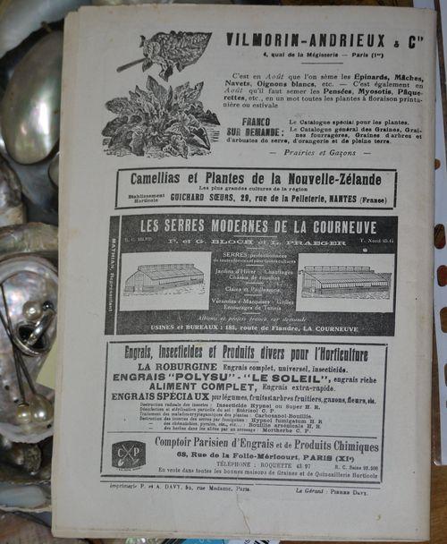 http://serveur2.archive-host.com/membres/images/1336321151/fleurs/Violas/Vilmo/v0-4.jpg