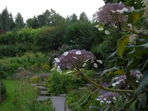 http://serveur2.archive-host.com/membres/images/1336321151/fleurs/hortense/h0.jpg