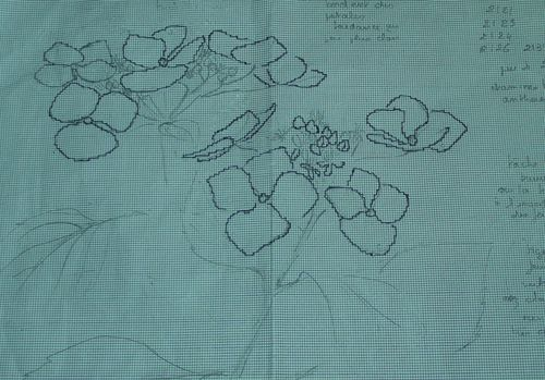 http://serveur2.archive-host.com/membres/images/1336321151/fleurs/hortense/hdessin0.jpg